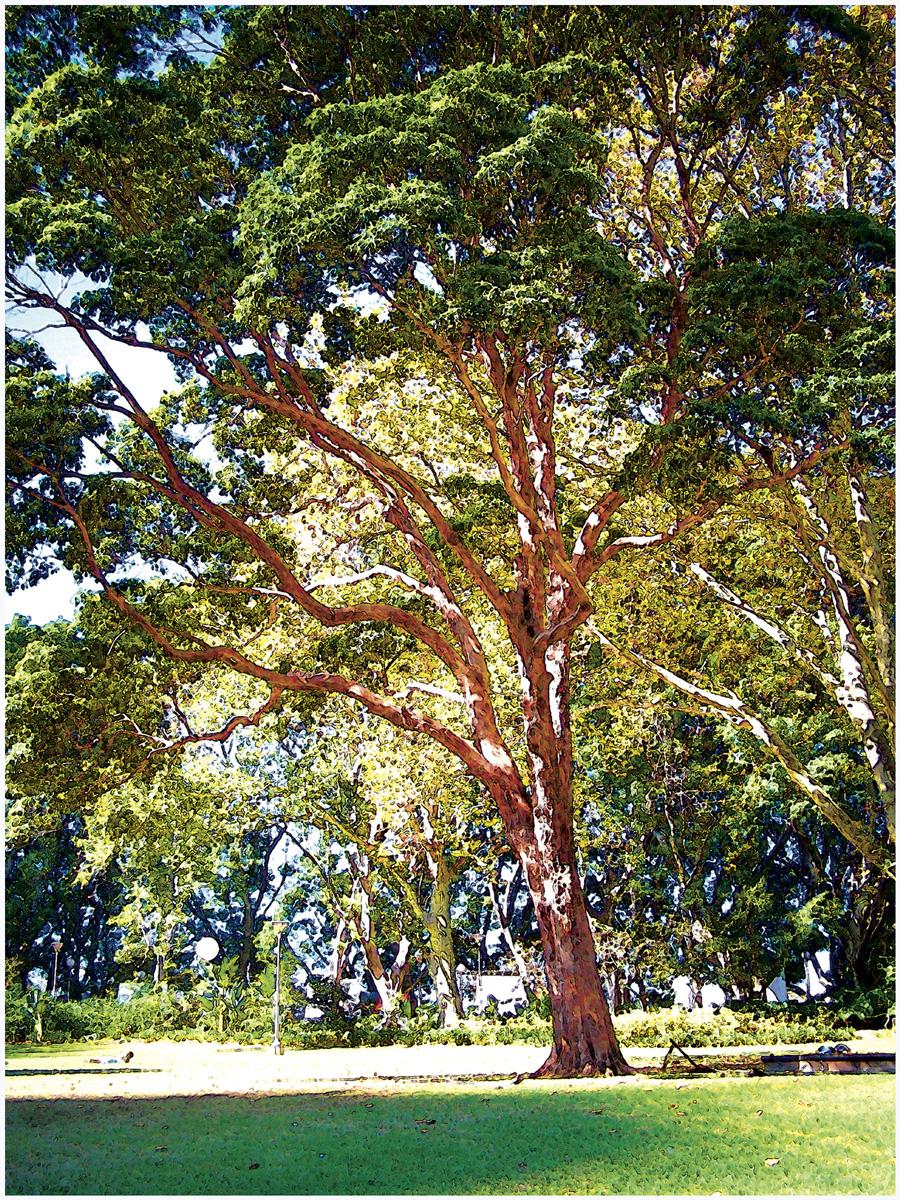 Trees 003 – 006_AU12