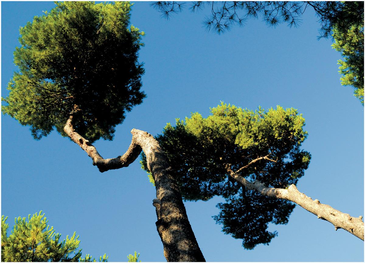 Trees 007 – 018_I08-1.13