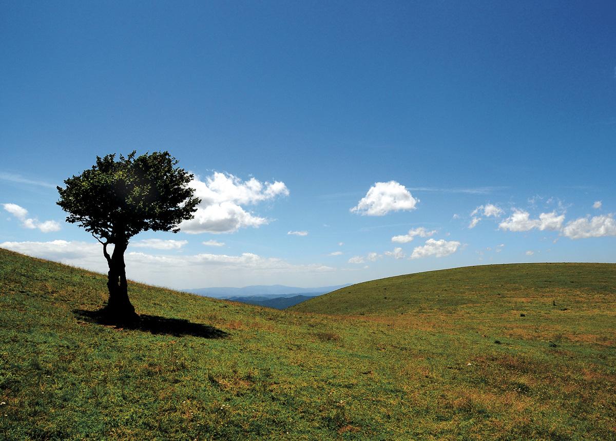 Trees 008 – 021_I09.3-27