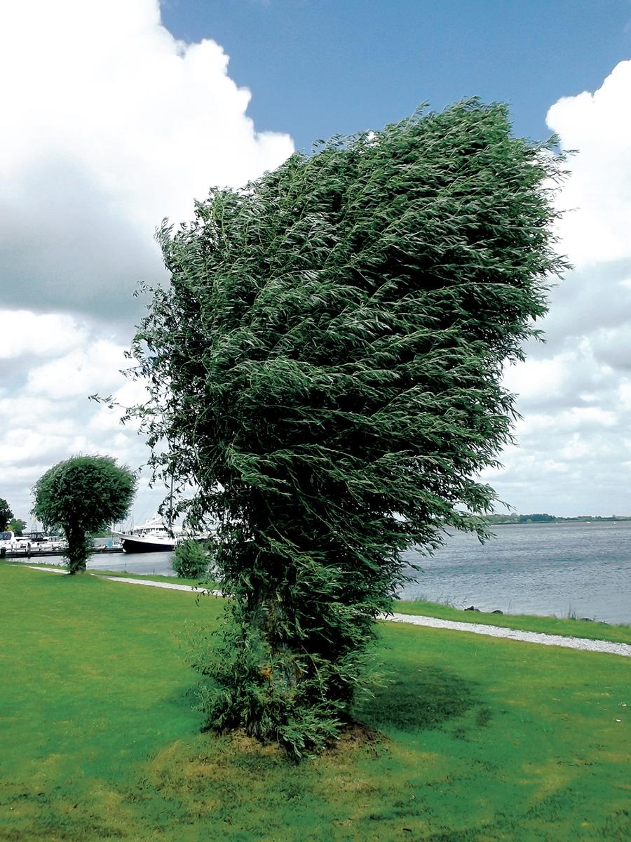 Trees 009 – 025_H14.1.43