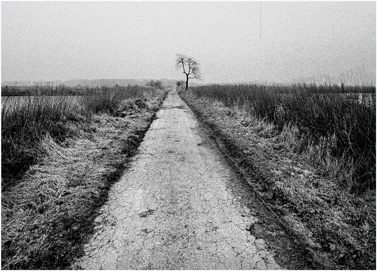 Trees 012 – 039_L1.90
