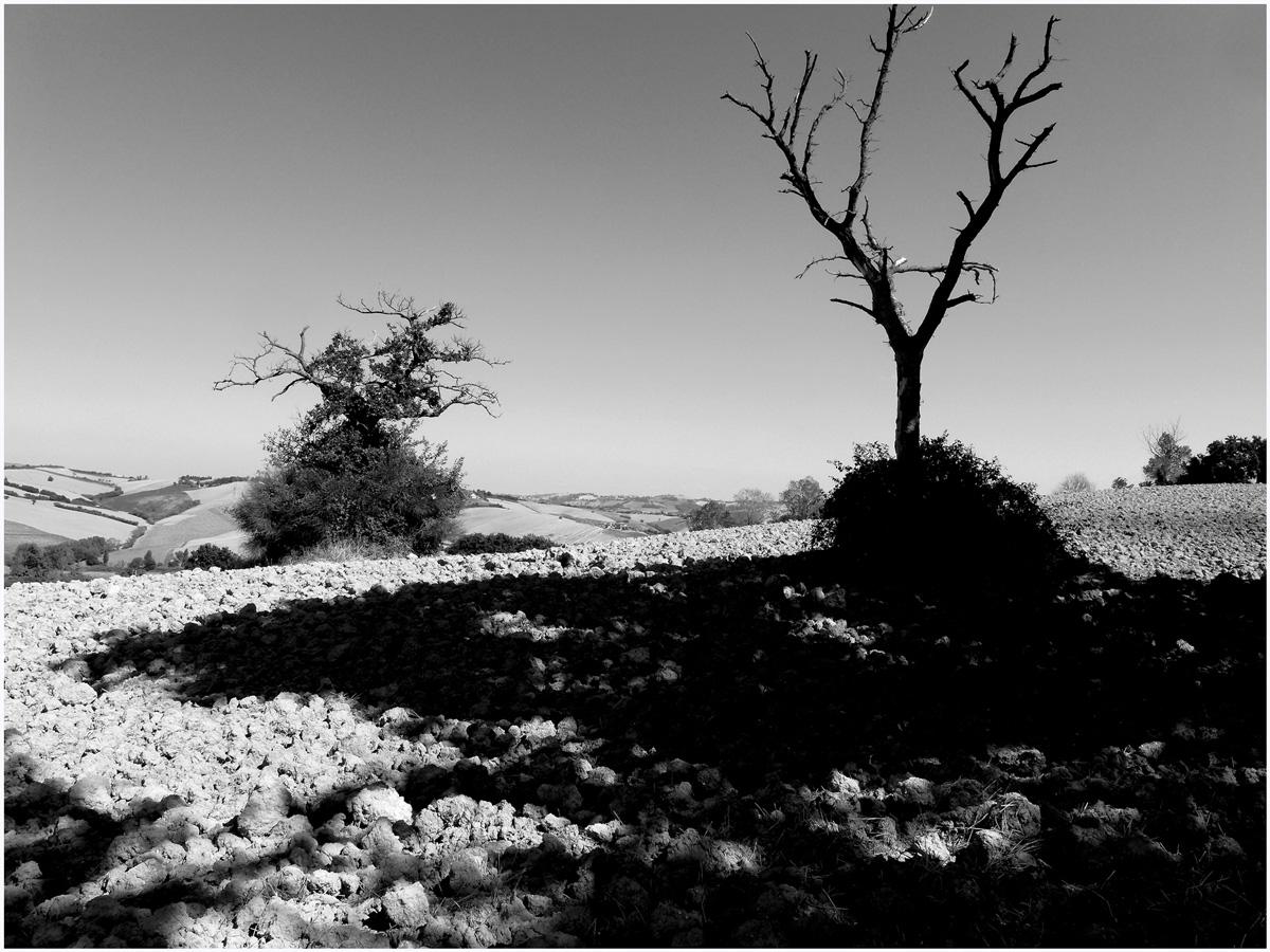 Trees 013 – 040_I15.24.59