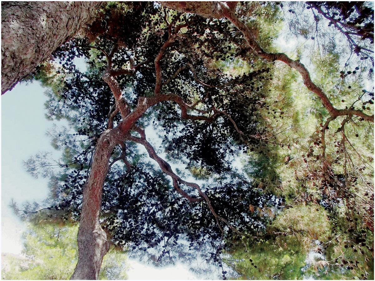 Trees 015 – 056_I14.3.40