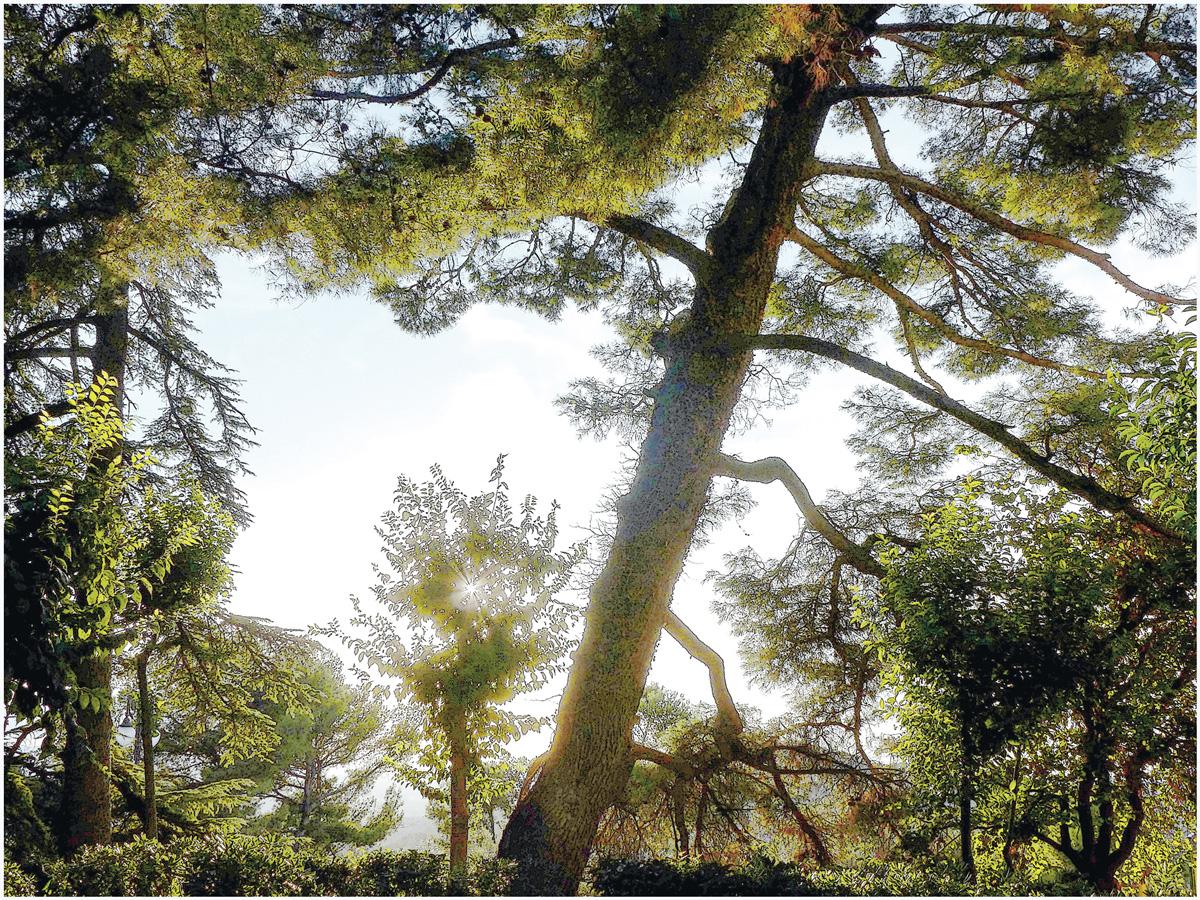 Trees 016 – 057_I15.23.80