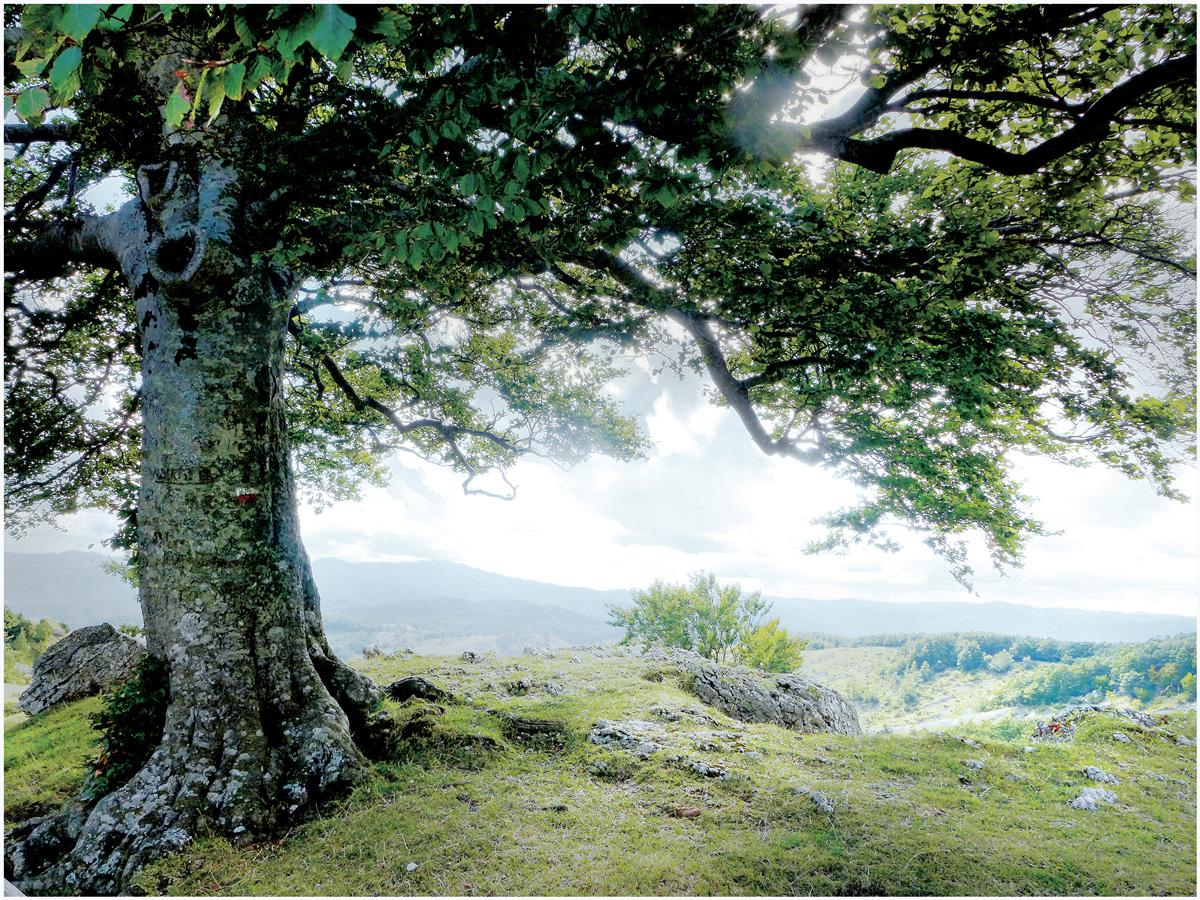 Trees 017 – 058_I15.22.80