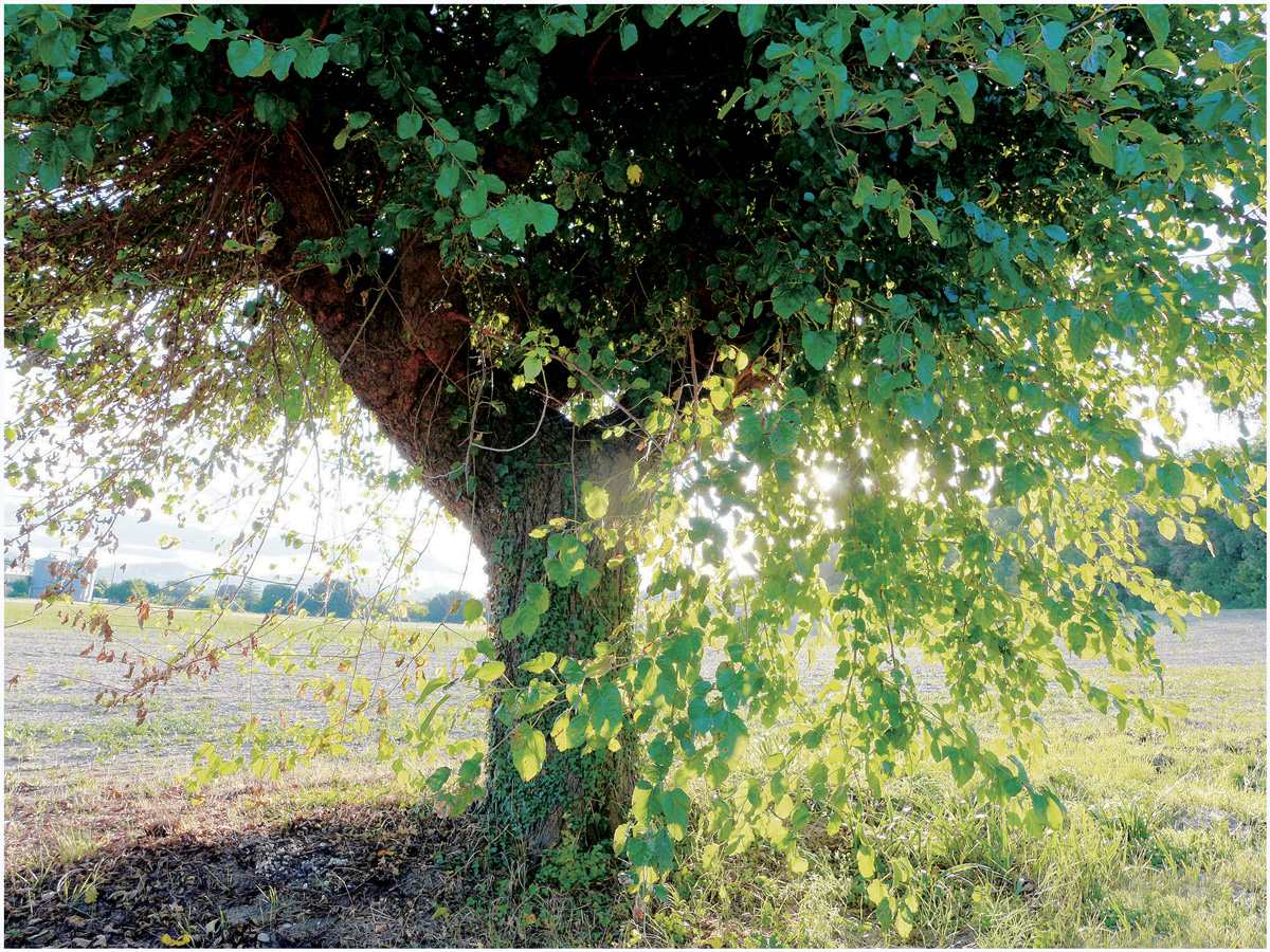 Trees 018 – 060_I15.22.61