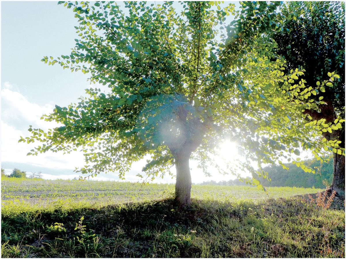 Trees 019 – 061_I15.22.60