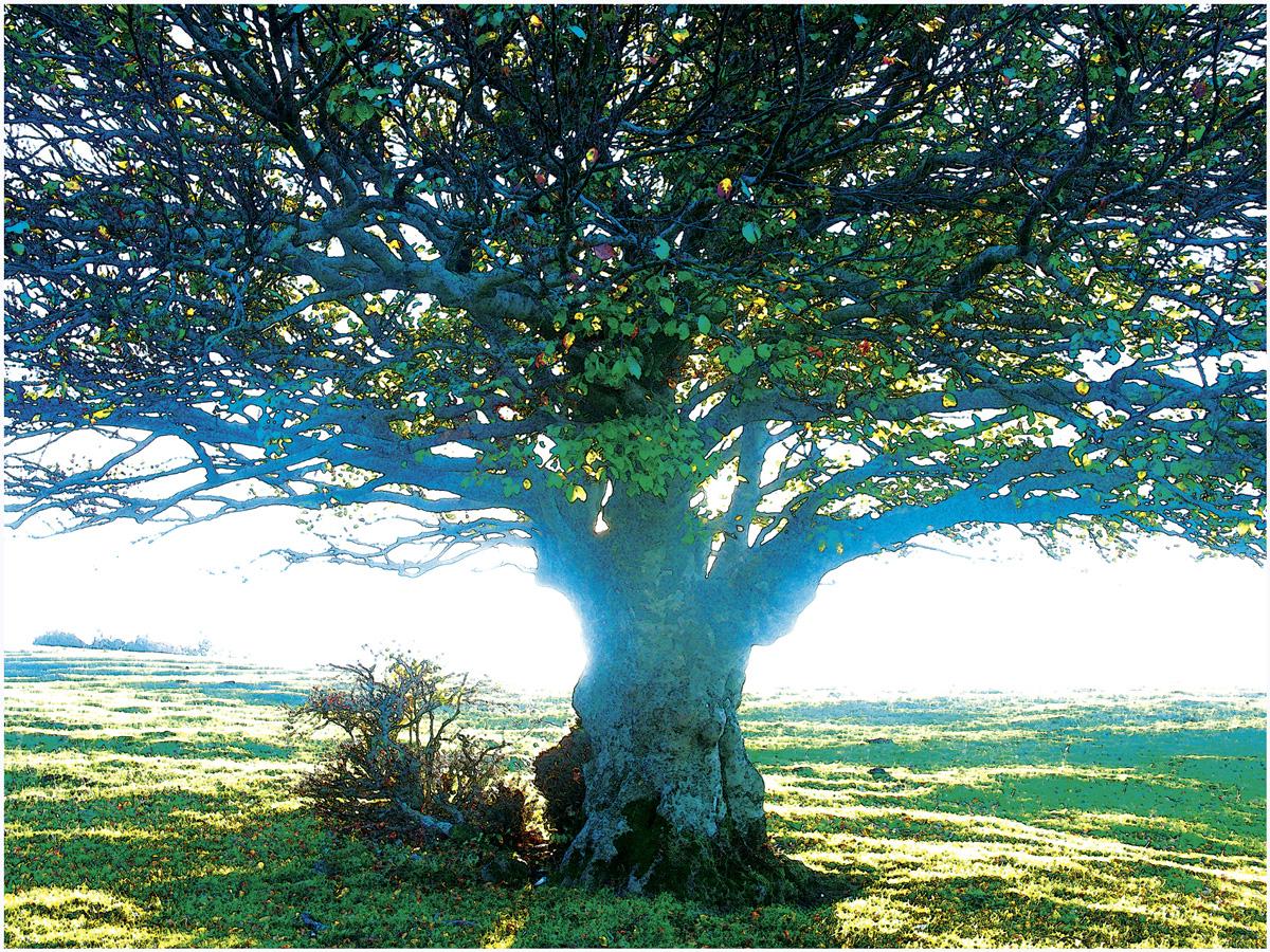 Trees 020 – 062_I07.15