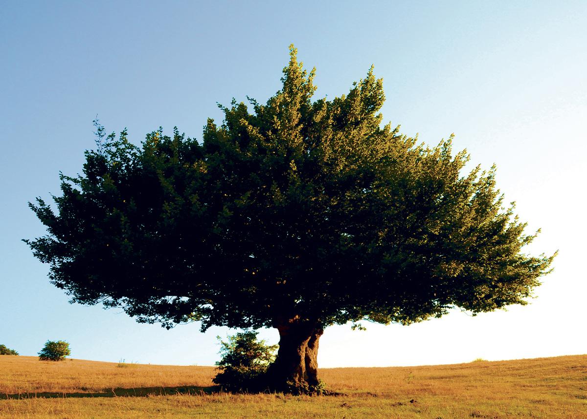 Trees 021 – 065_I08-1.58