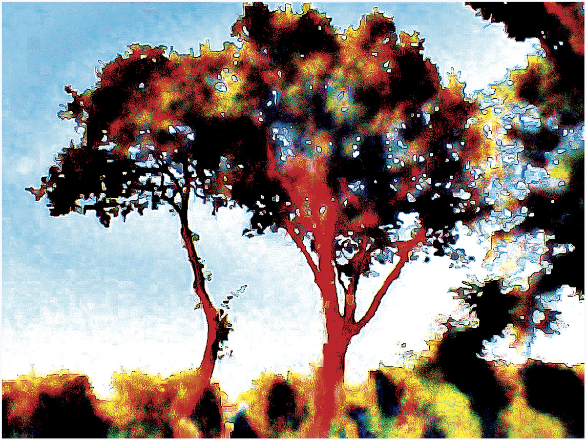 Trees 022 – 071_Ostra24_Kopie
