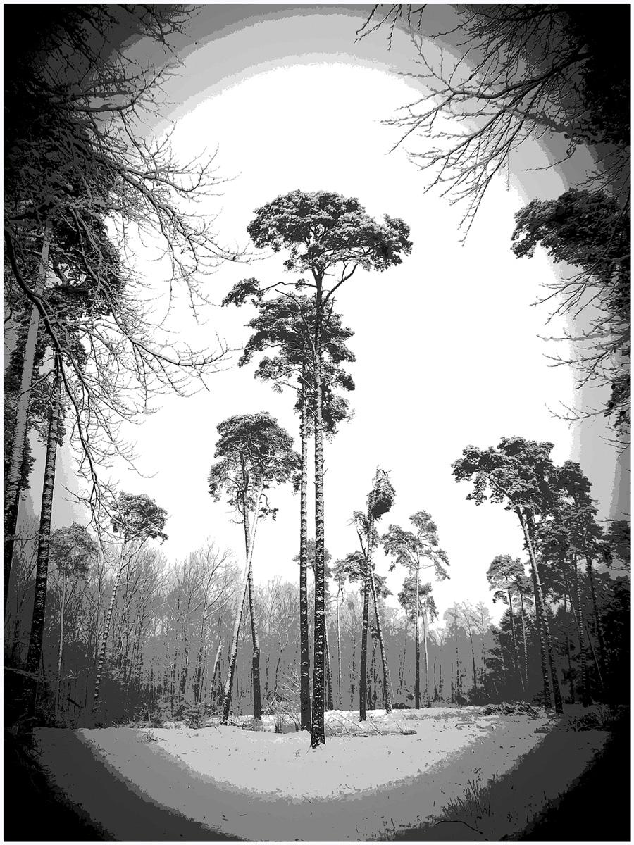 Trees 024 – 083_M14.1.87