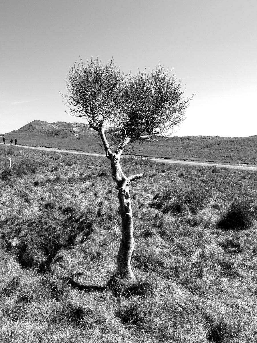Trees 026 – 089.2_N17.2.44