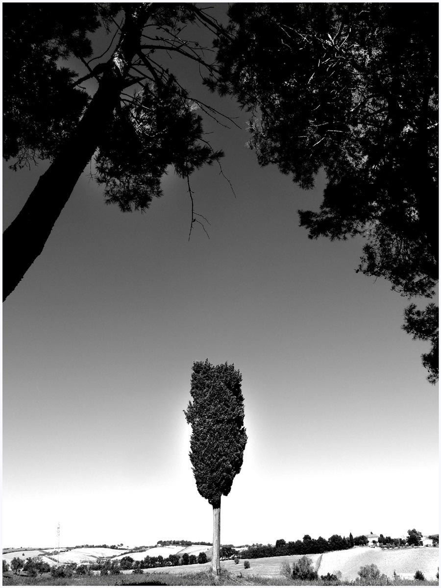 Trees 027 – 089_I15.24.62