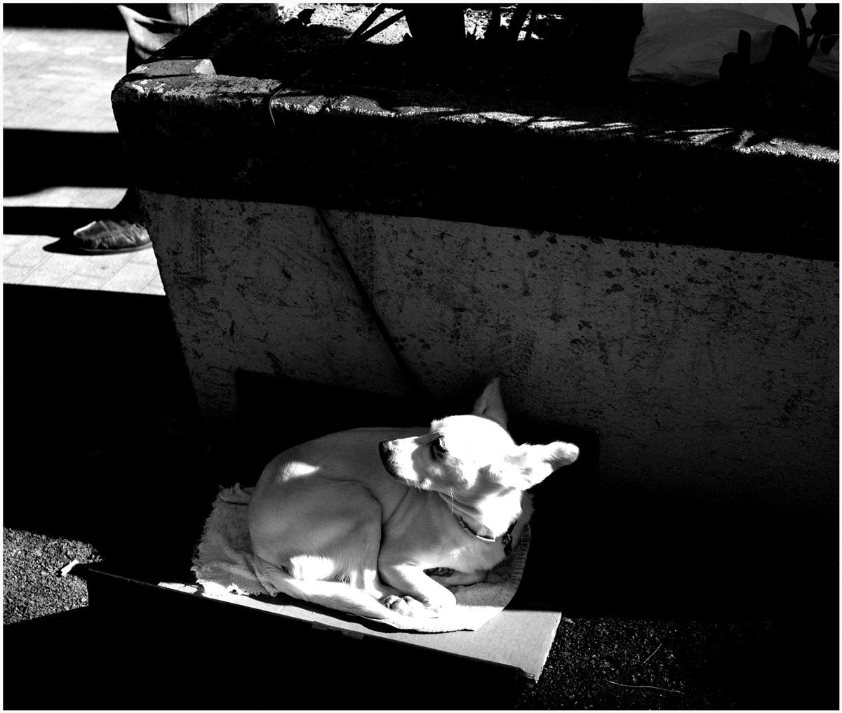 Animals 025 – 100_T1.36