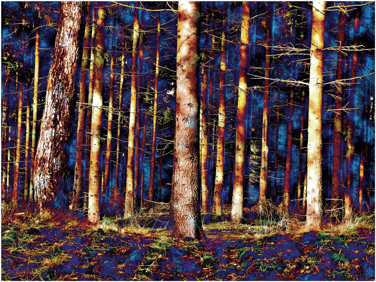 Trees 033 – 107_MLXY29