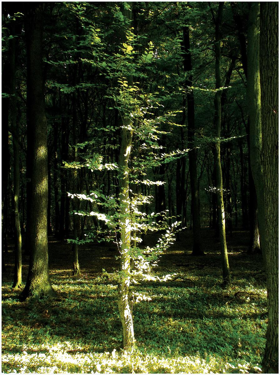 Trees 034 – 115_M13.1-34