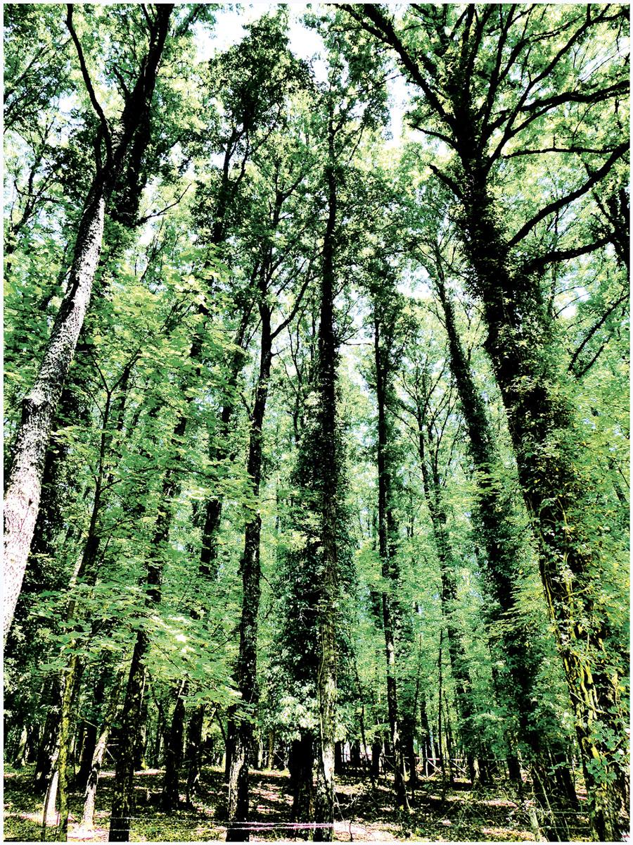 Trees 035 – 117_I15.13.23