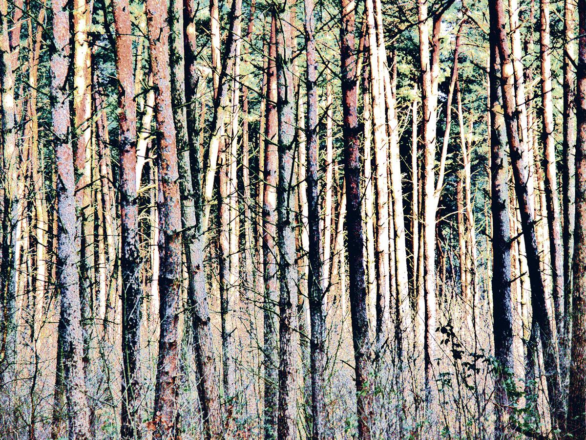 Trees 037 – 120_MLXY37