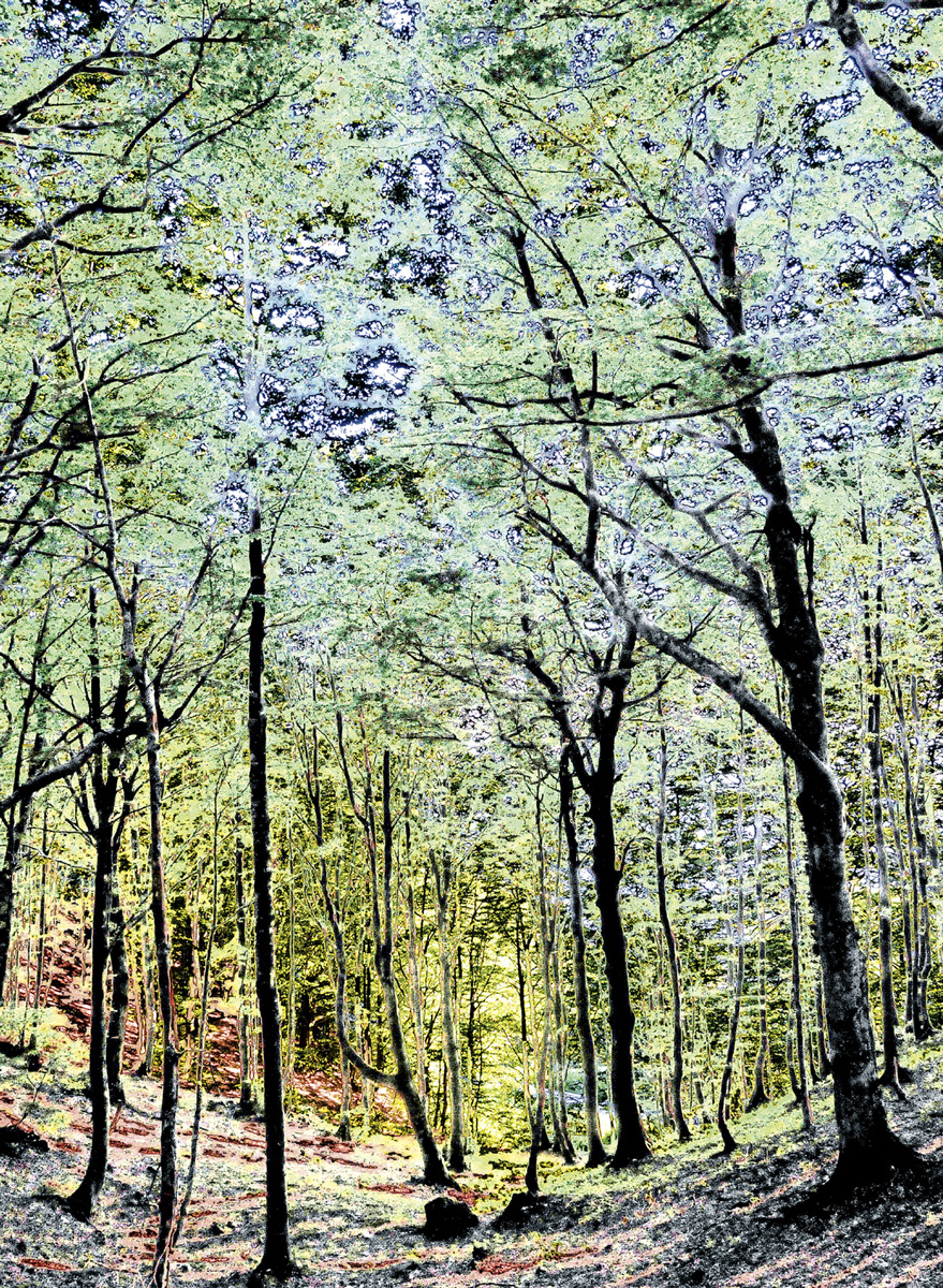 Trees 041 – 129_I08-1.52