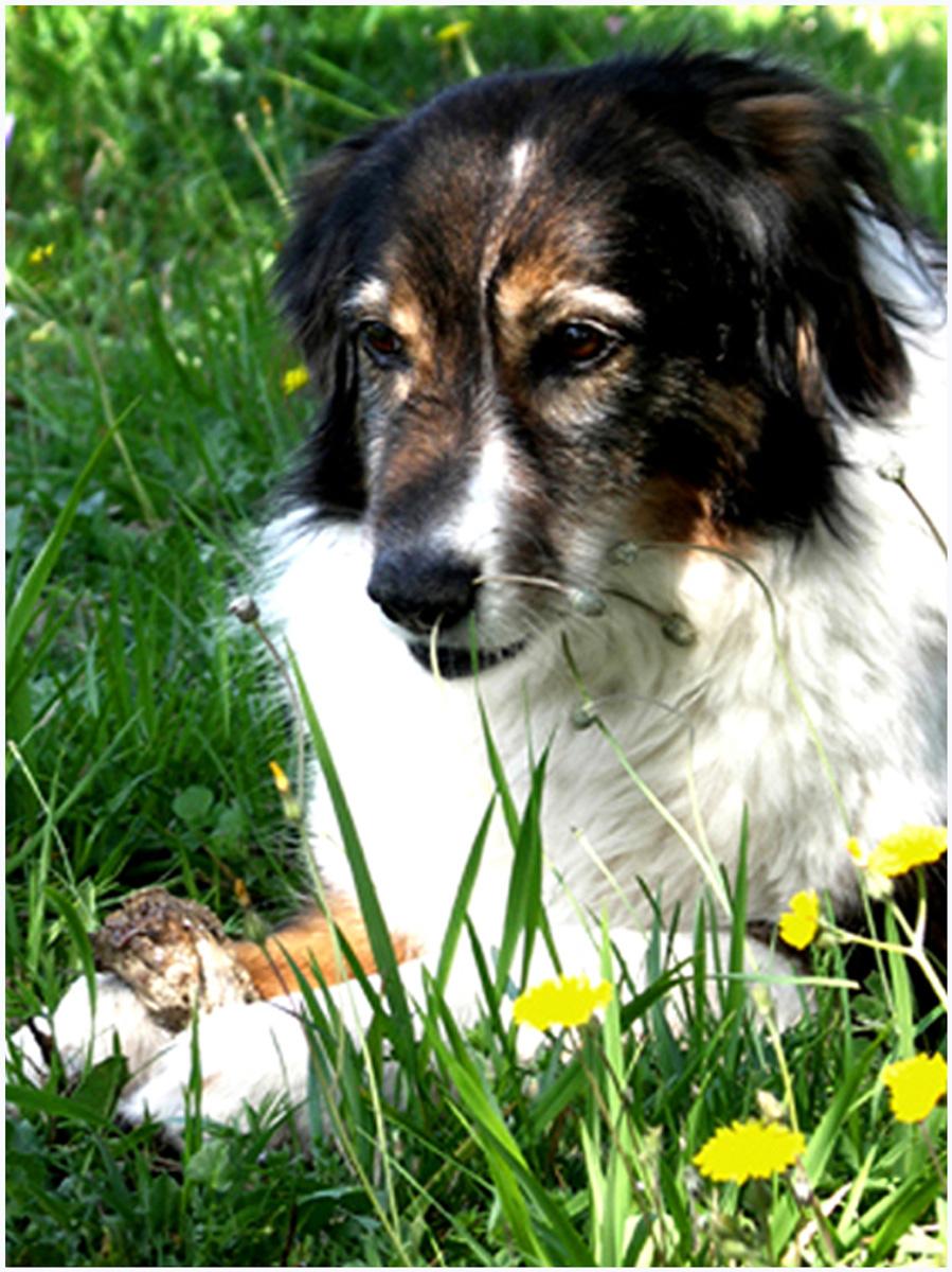Animals 043 – 146_Hund_027