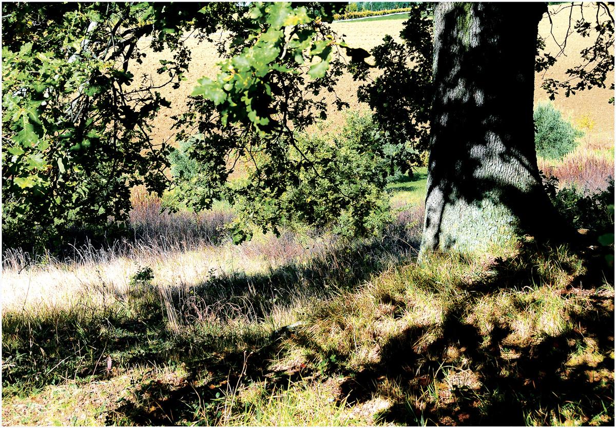 Trees 043 – 146_I10.1-86