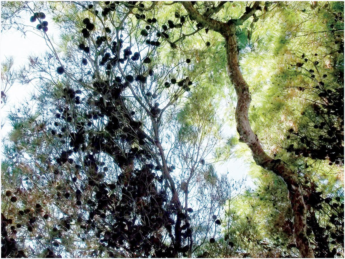 Trees 044 – 147_I14.3.41