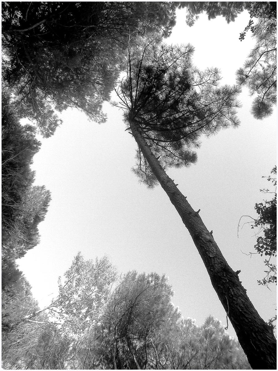 Trees 045 – 151_I15.34.2