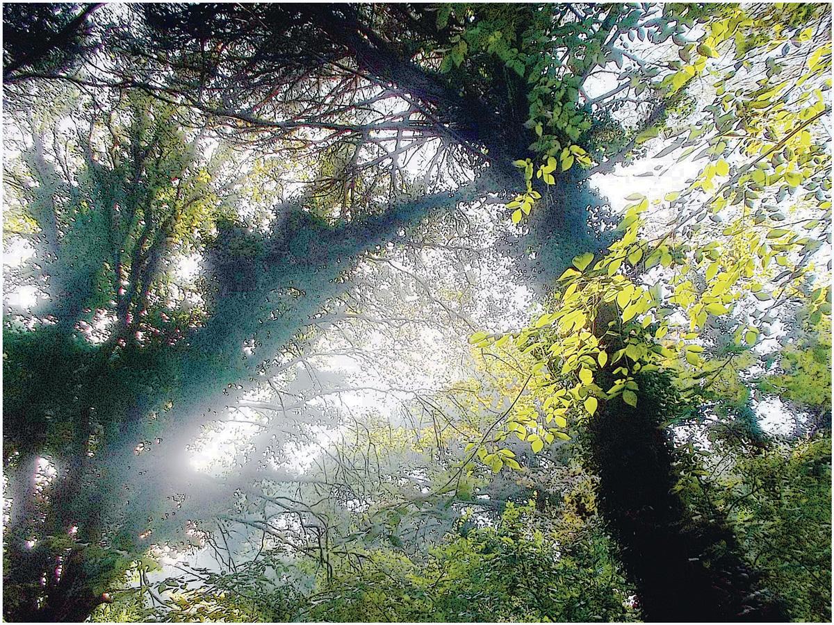 Trees 047 – 153_I15.34.7