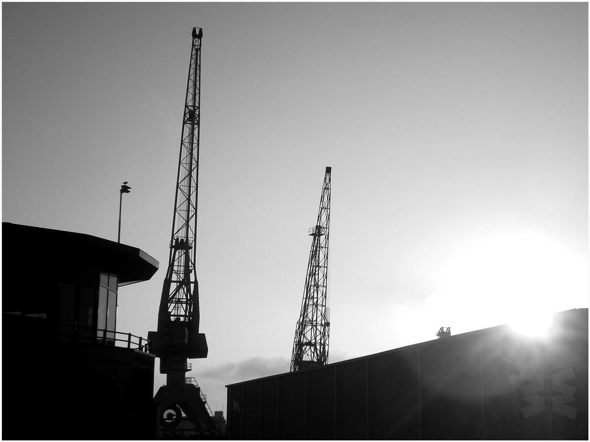 Dancing Cranes 053 – 155_H14.4.26
