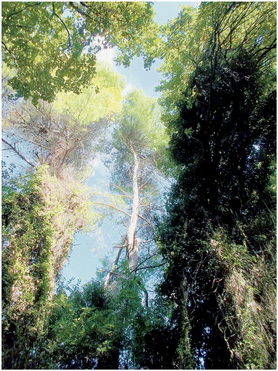 Trees 048 – 155_I15.28.2