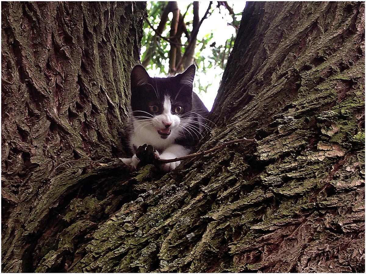 Animals 049 – 167_cat1.94_kl