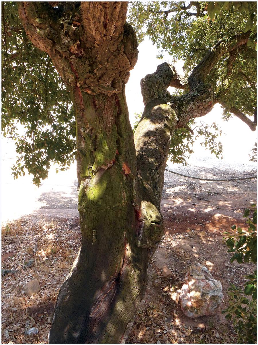 Trees 053 – 171_I16.20.8