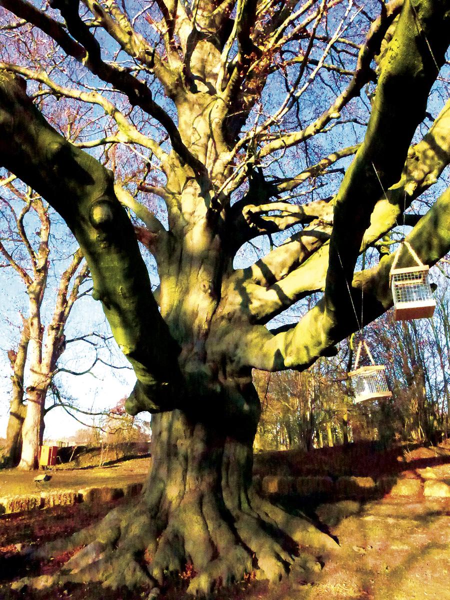 Trees 054 – 172_M16.2.69