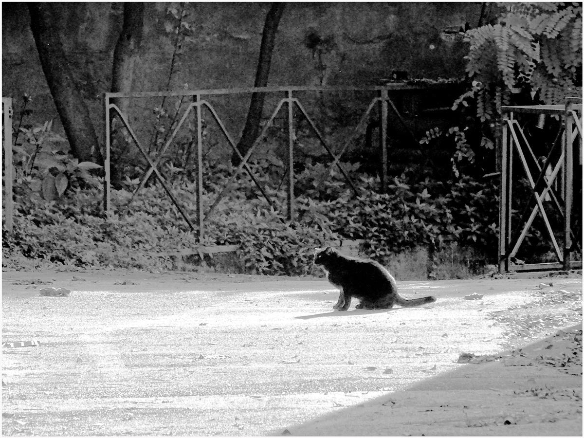 Animals 055 – 201.5_I17.26.72
