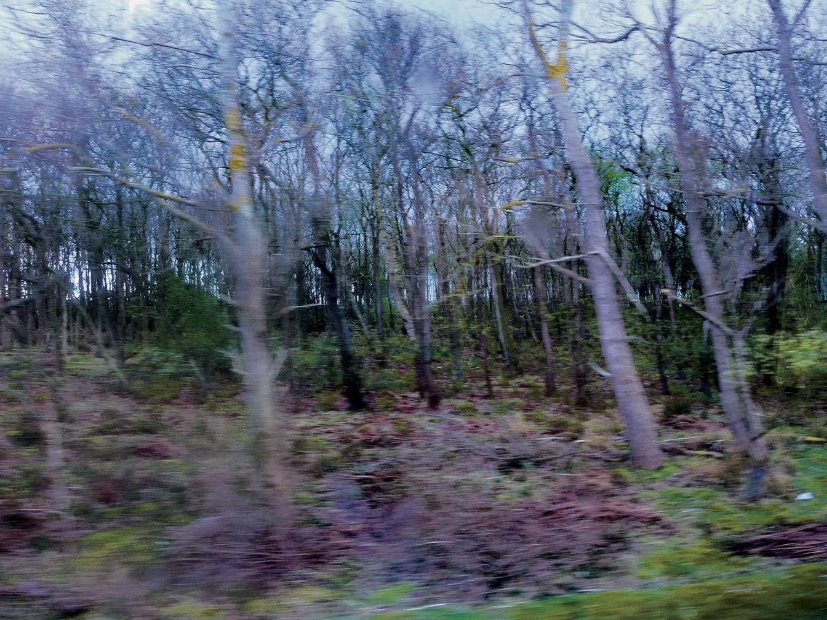 Trees 059 – 203_N15.3.7