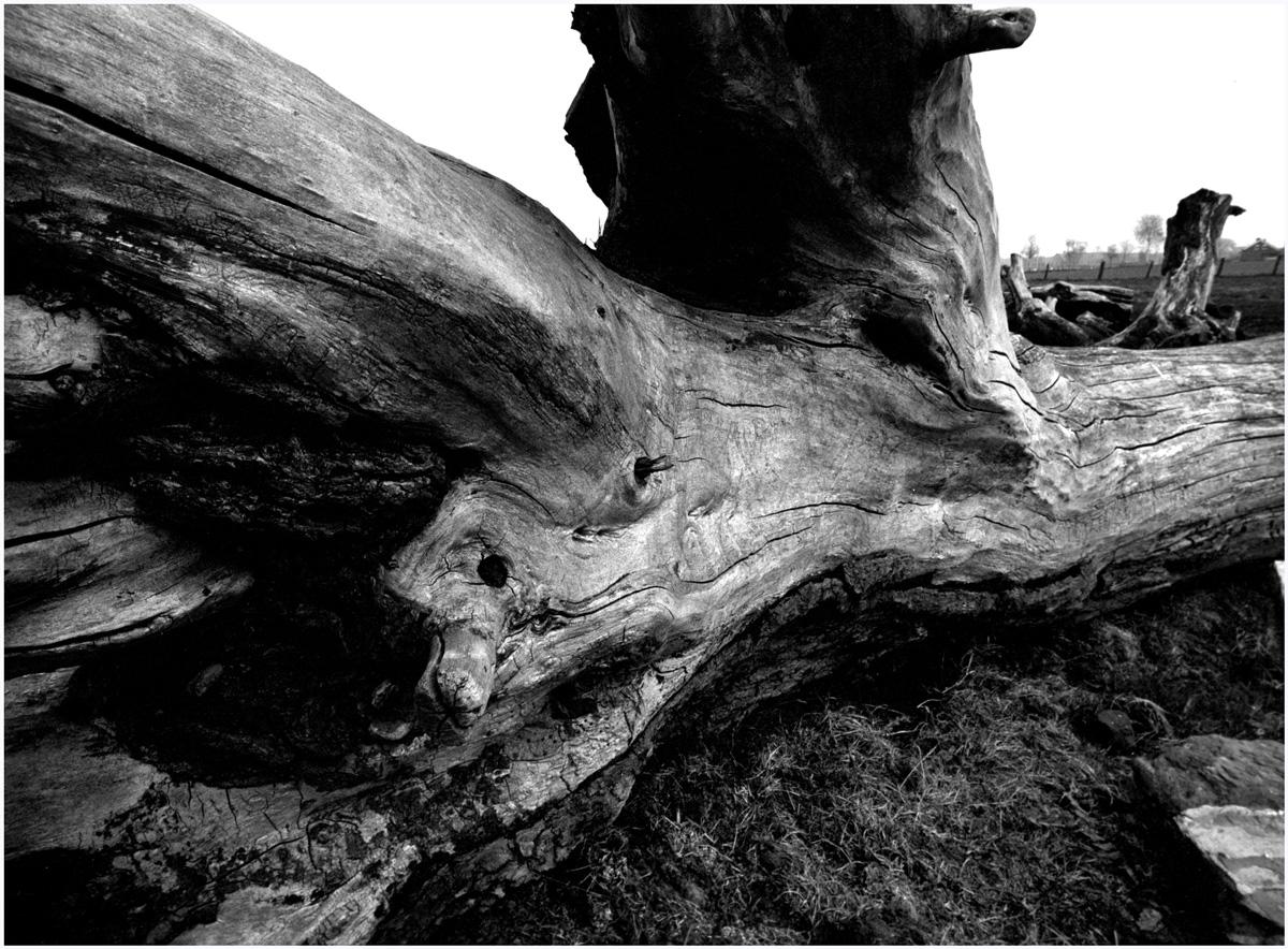 Trees 061 – 227_N1.70