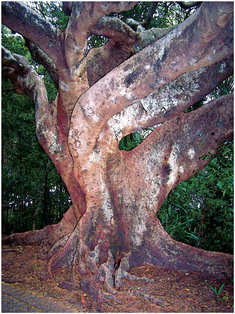 Trees 063 – 240_AU43