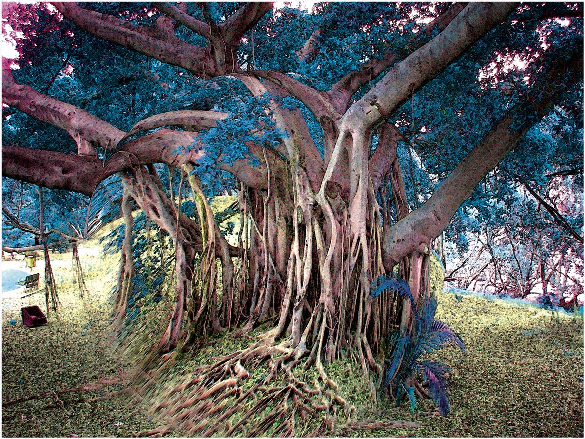 Trees 064 – 243_AU46