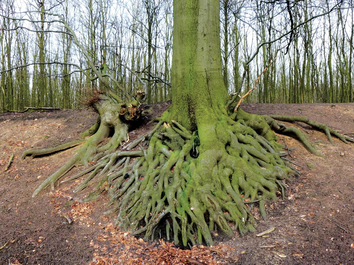 Trees 065 – 244_M16.1.59