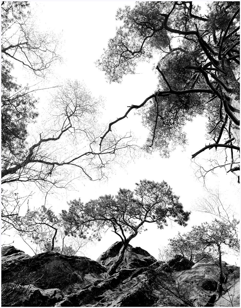 Trees 067 – 251N1.36