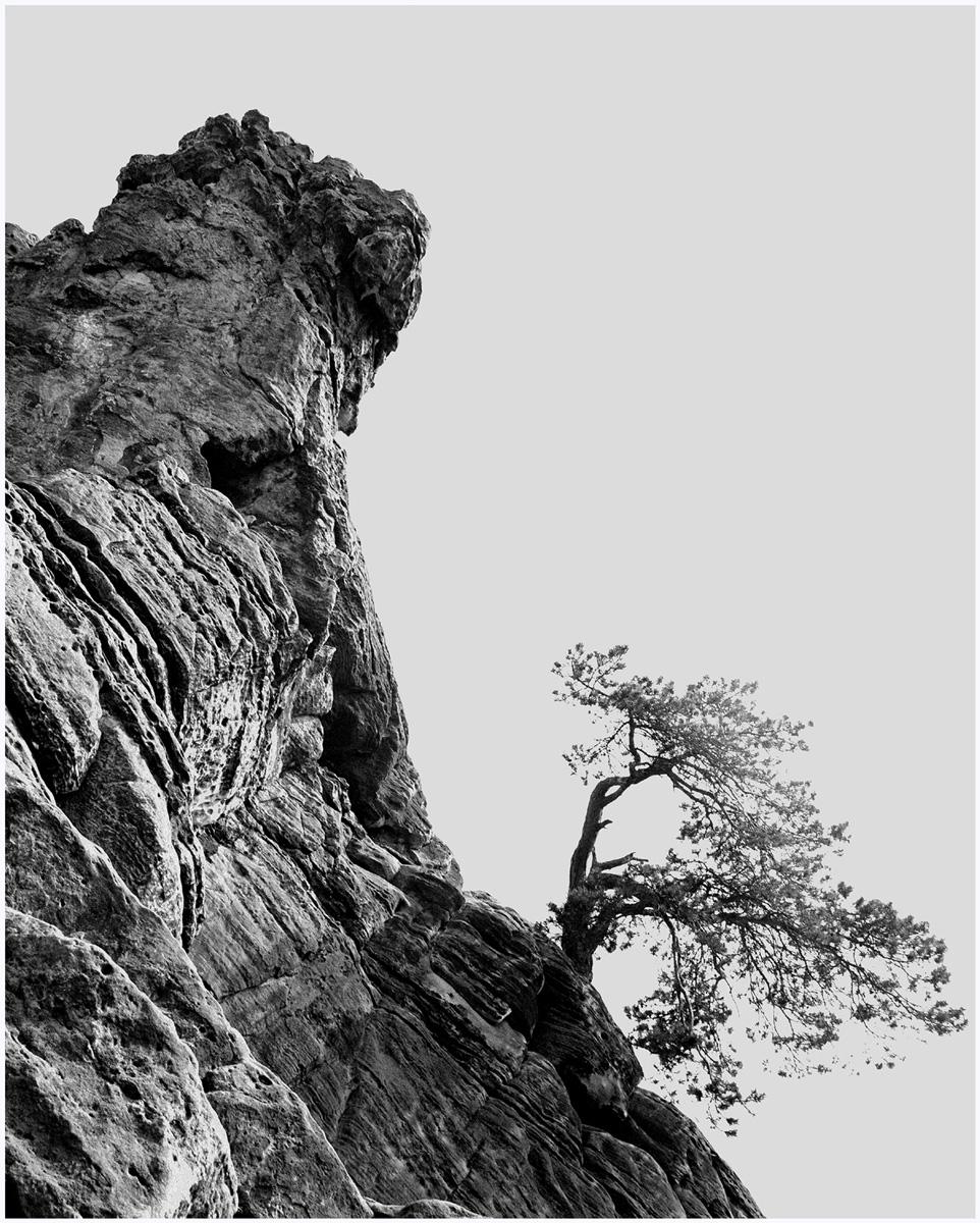 Trees 068 – 252_N1.31