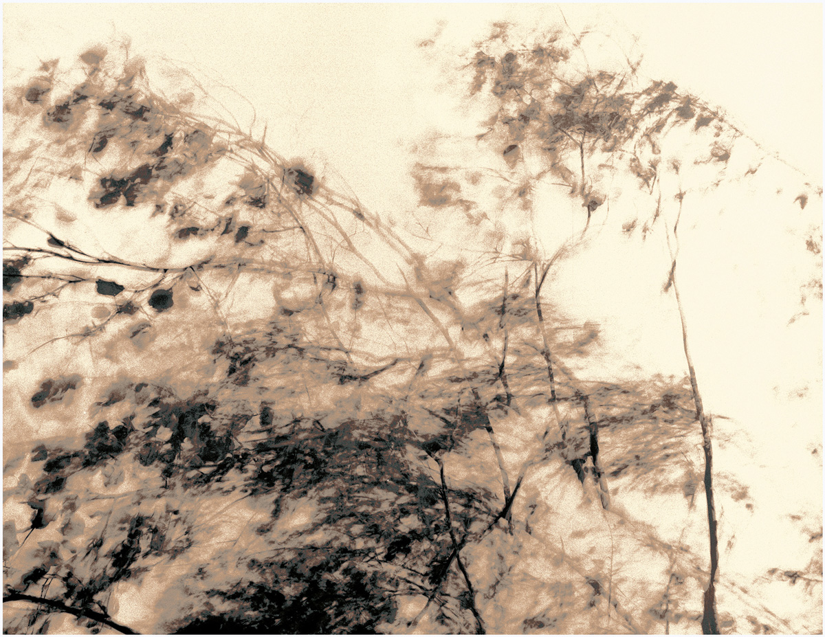 Trees 073 – 276_Diadigi3.22