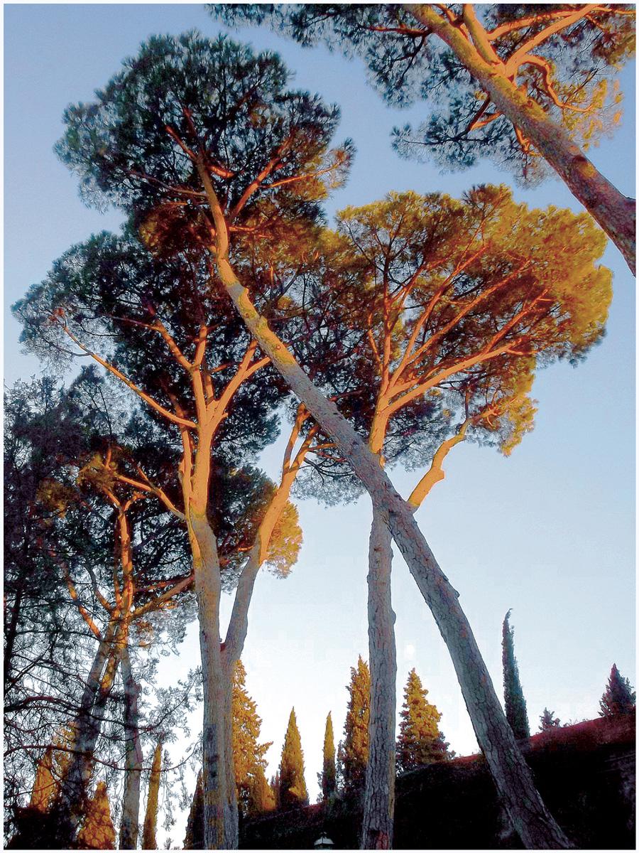 Florenz 153 – 399_I15.37.48