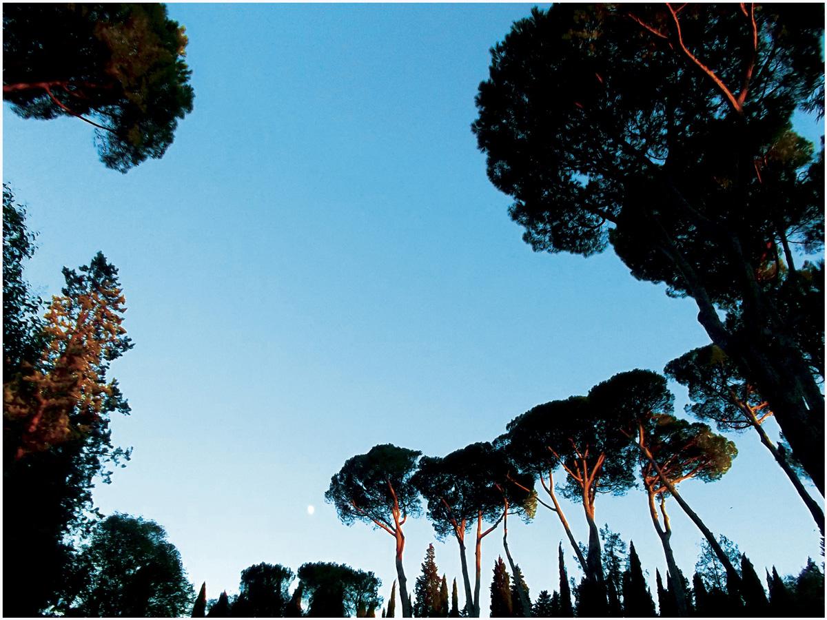 Florenz 155 – 403_I15.37.50