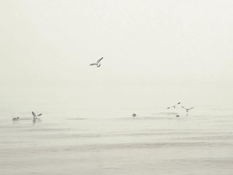 Birds_001.3_I14.11.75