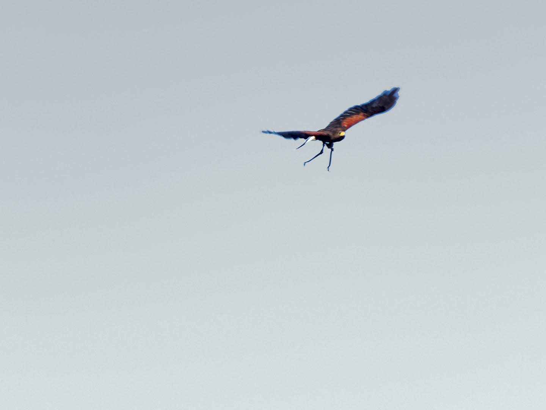 Birds_018_I15.21.86