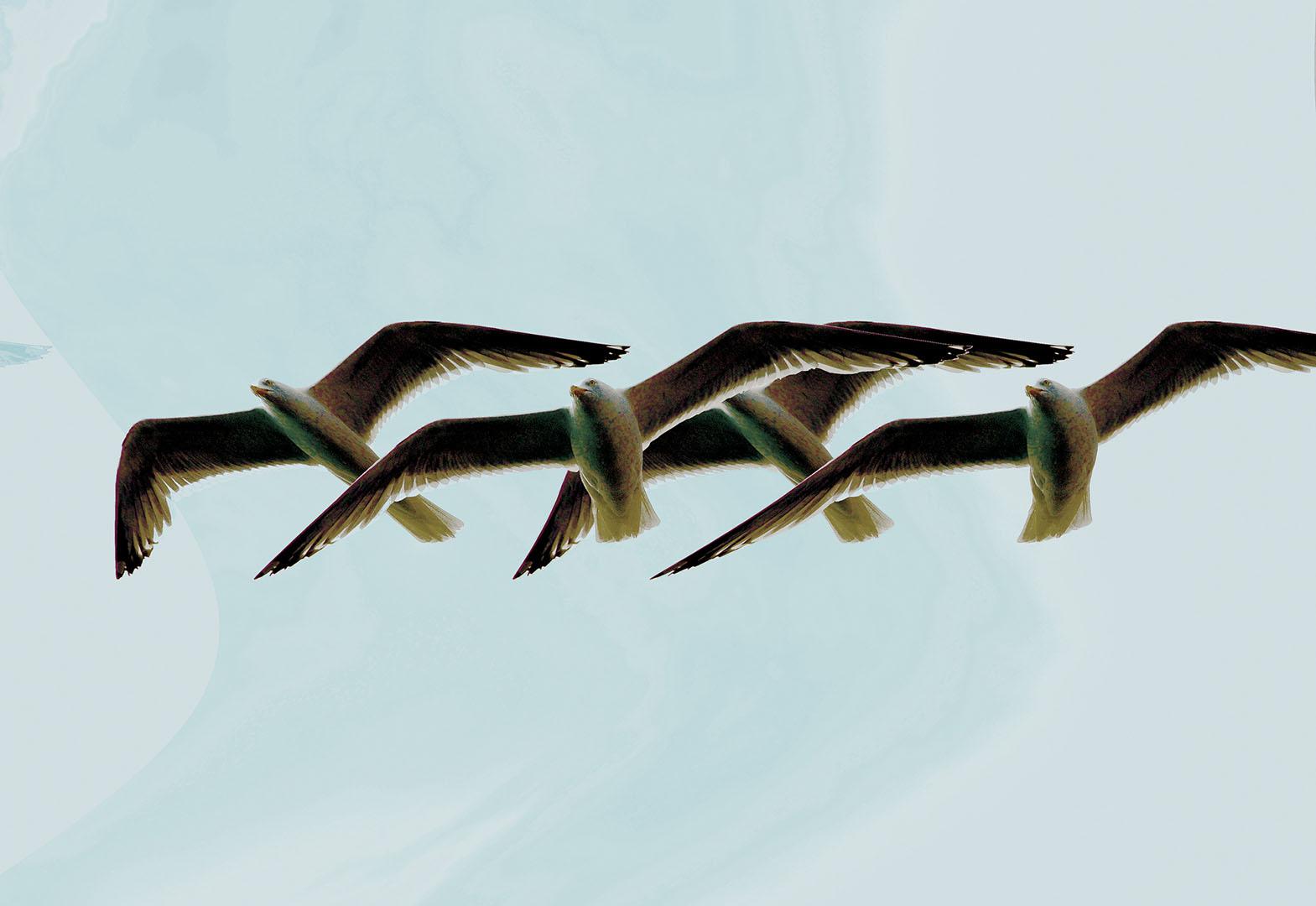 Birds_021_N12.2.85