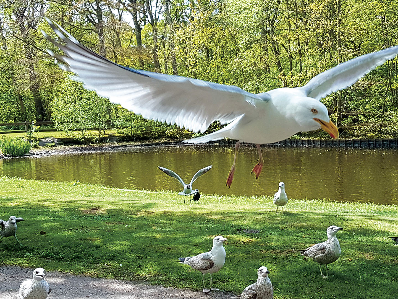 Birds_024_N17.1.24