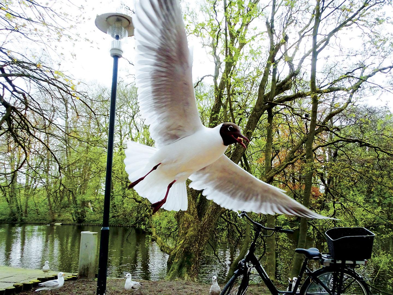 Birds_029_N18.2.30