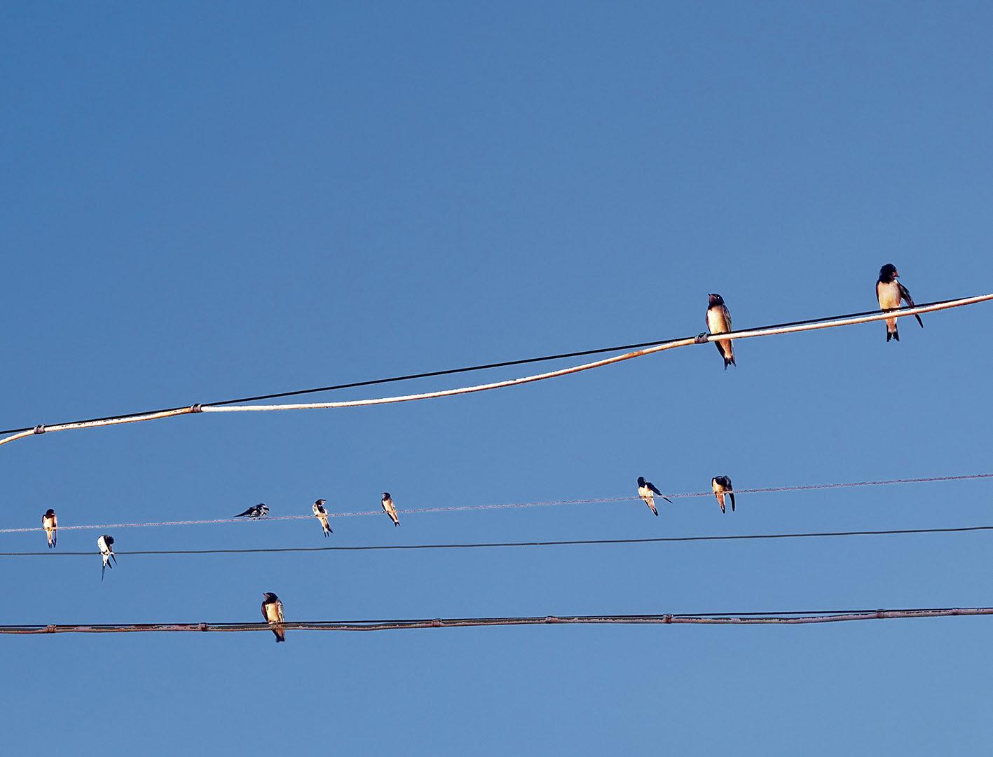 Birds_042_I17.20.91